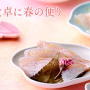 春の香りがいっぱい 桜香小鯛に真鯛昆布〆販売開始